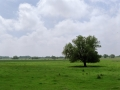 granica_Landschaft_Wiese_links
